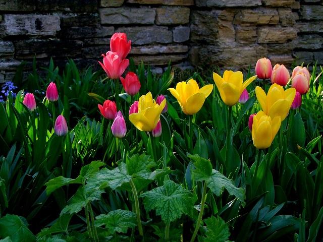 April Spring